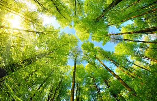 Il sostegno ambientale diventa una nuova area d'intervento